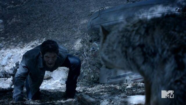 Datei:Teen Wolf Season 3 Episode 14 More Bad Than Good Tyler Posey Scott McCall Alpha Roars.jpg