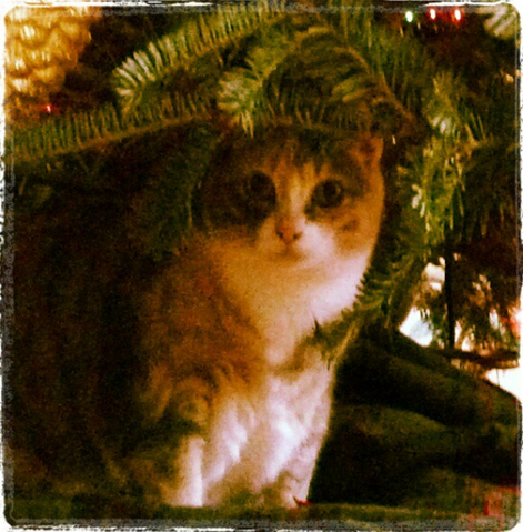 File:Teen Wolf Christmas Eaddy Mays mom's cat.png