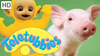 Teletubbies- Piglets - HD Video