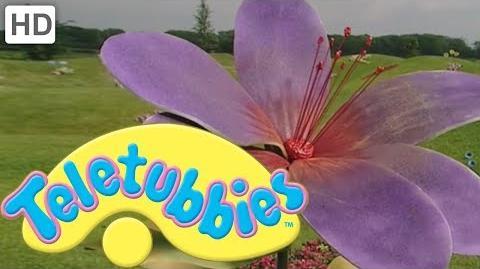 Teletubbies Colours Purple - HD Video