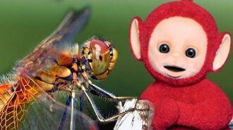 Teletubbies Dragonflies 354 Cartoons for Children