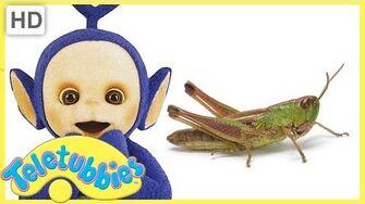Teletubbies Full Episode - Grasshopper Episode 309