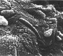 Bioforming
