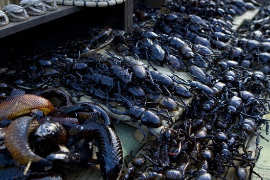 File:Terra Nova Market bugs.jpg