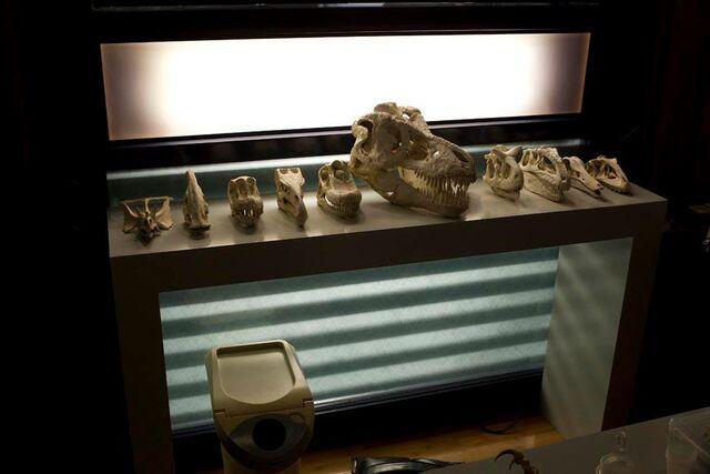 File:Laboratory skulls.jpg
