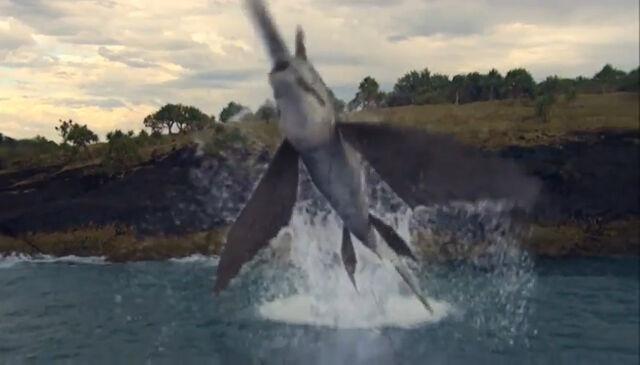 File:Swordfish2.jpg