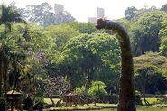 Terra Nova Brazil Brach2