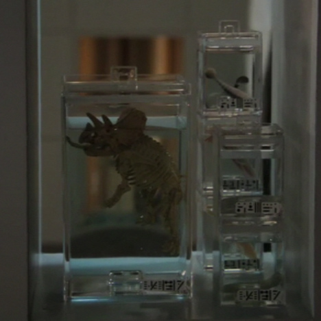 File:Triceratopsbaby.jpg