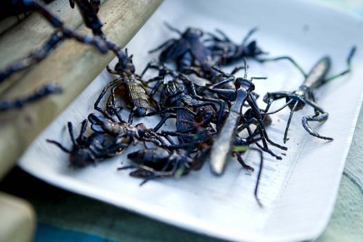 File:Terra Nova Market bugs2.jpg