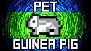 File:Pet hamster .jpg