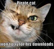 Pirate-cat