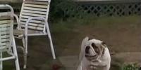Jonas (dog)