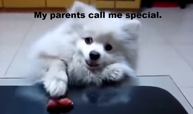 File:Special dog.png