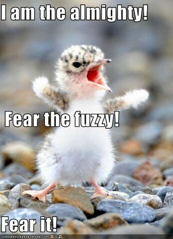 File:Cute,fearful,funny-d02fce431d693a65ad870e466b2e5291 h.jpg