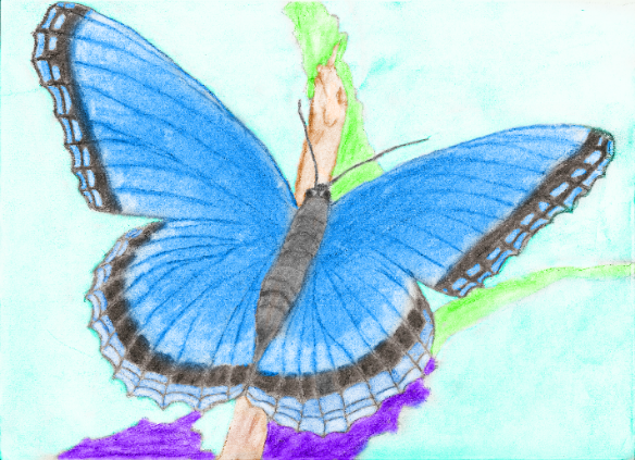 File:Colored Butterfly.png