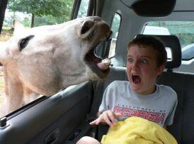Donkeyme