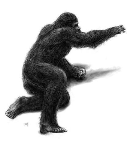File:Baby-bigfoot-bigfoot-bigfoot-bigfoot-tracks-tracks-yeti-cryptozoology-13294970-500-554.jpg