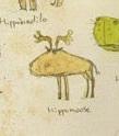 Hippomoose
