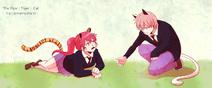Tiger + Cat