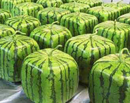 Blockmelons