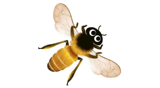 File:Honey-bee.jpg