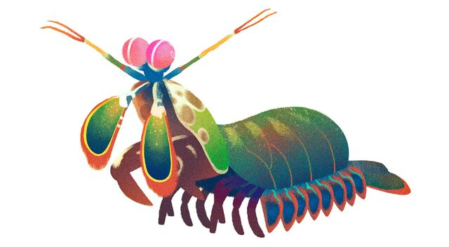 File:Mantis-shrimp.jpg
