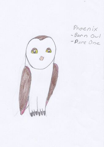 File:Phoenix as a pure one barn owl.jpg