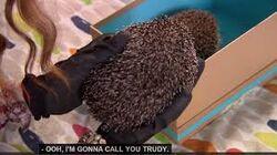 Victor the Hedgehog