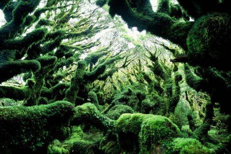 File:NZ7.jpg