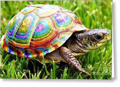 Rainbow-turtle 2
