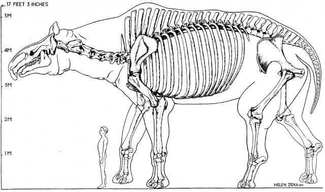 File:Giant rhino size.jpg