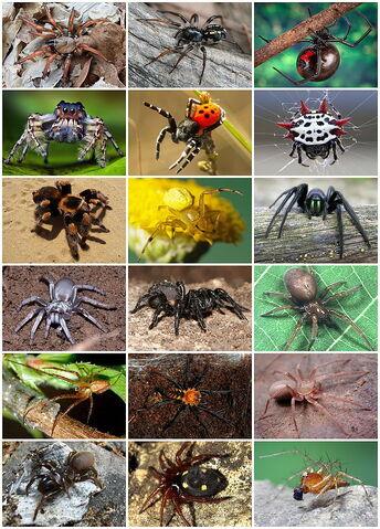 File:Spiders Diversity.jpg