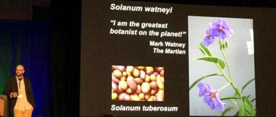 File:Solanum Watney 2.jpg