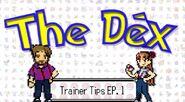 Trainer Tips 1 Intro