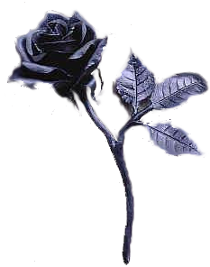 File:Blackrose.png