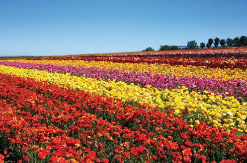 File:Flower Fields.png