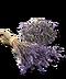 C267 Invigorating beverage i04 Lavender