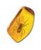 C089 Insects in amber i04 Ancient spider