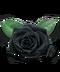 C233 Cursed things i02 Black rose