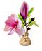C379 Blooming garden i04 Magnolia seedlings
