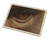 C509 Pictures of eyes i04 Money eyes