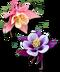 C205 Beautiful Flowers i03 Aquilegia