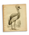 C139 Beautiful birds i06 Grey Crowned Crane