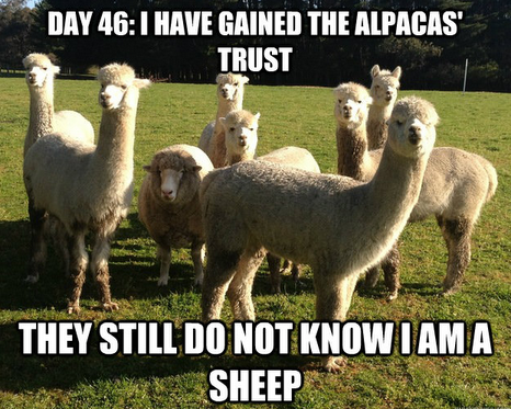 File:I am not a sheep.png