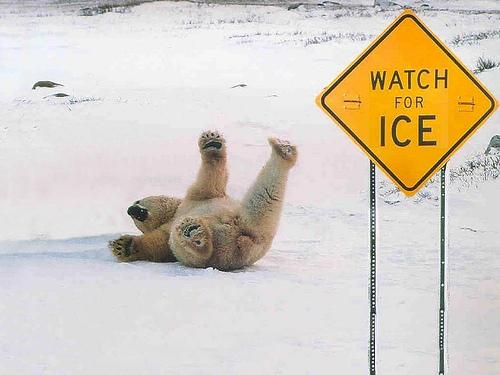 File:Funny-animal-signs-1.jpg