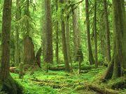 Em fwf wa rainforest