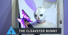 Cleavesterbunny