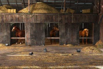 File:Horses 2.jpg