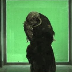 Slimey horned cloak creature