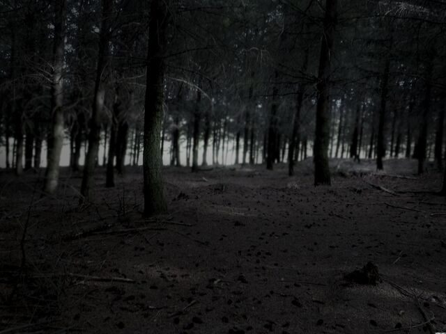 File:5785-dark-forest-woods-nature.jpg